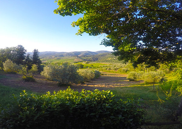 II cassello country house tuscany vineyard view