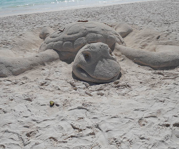 Sand turtle at Akumal beach in Mexico